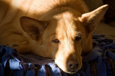 lazydog[1]